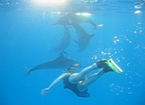 dolphin-k