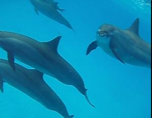 dolphinlook233height