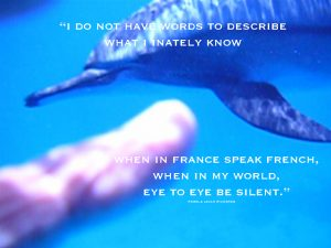 dolphin-point-finger-Samadai pamela-quote