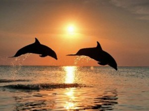 two-dolphins-sunset-200-left