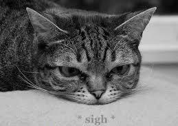 Sigh cat 1