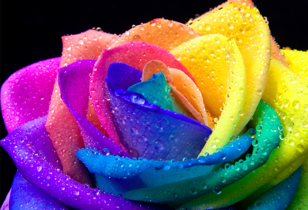 Pin Rainbow Rose Graphics Code Glitter Comments on Pinterest