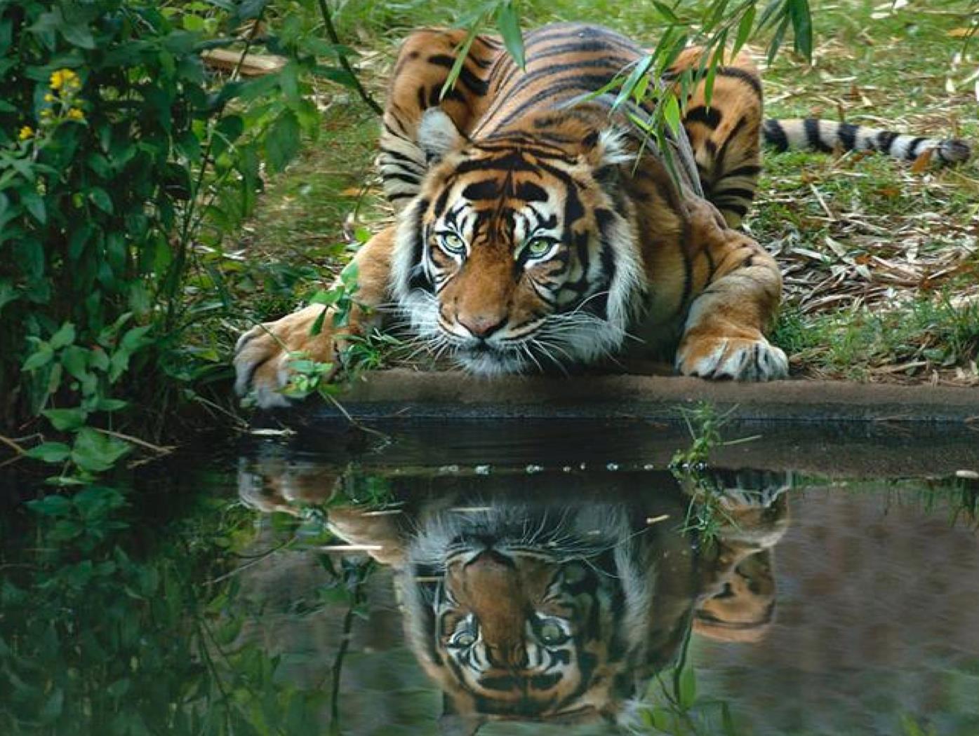 Green tiger eyes - photo#7