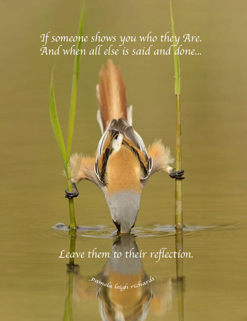 Pamela Leigh Richards Reflection Pamela Quote Bird Water