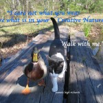 Duck Kitty pamela quote creative nature
