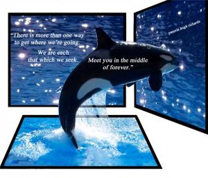 Whale-Jump-Mirror pamela quote