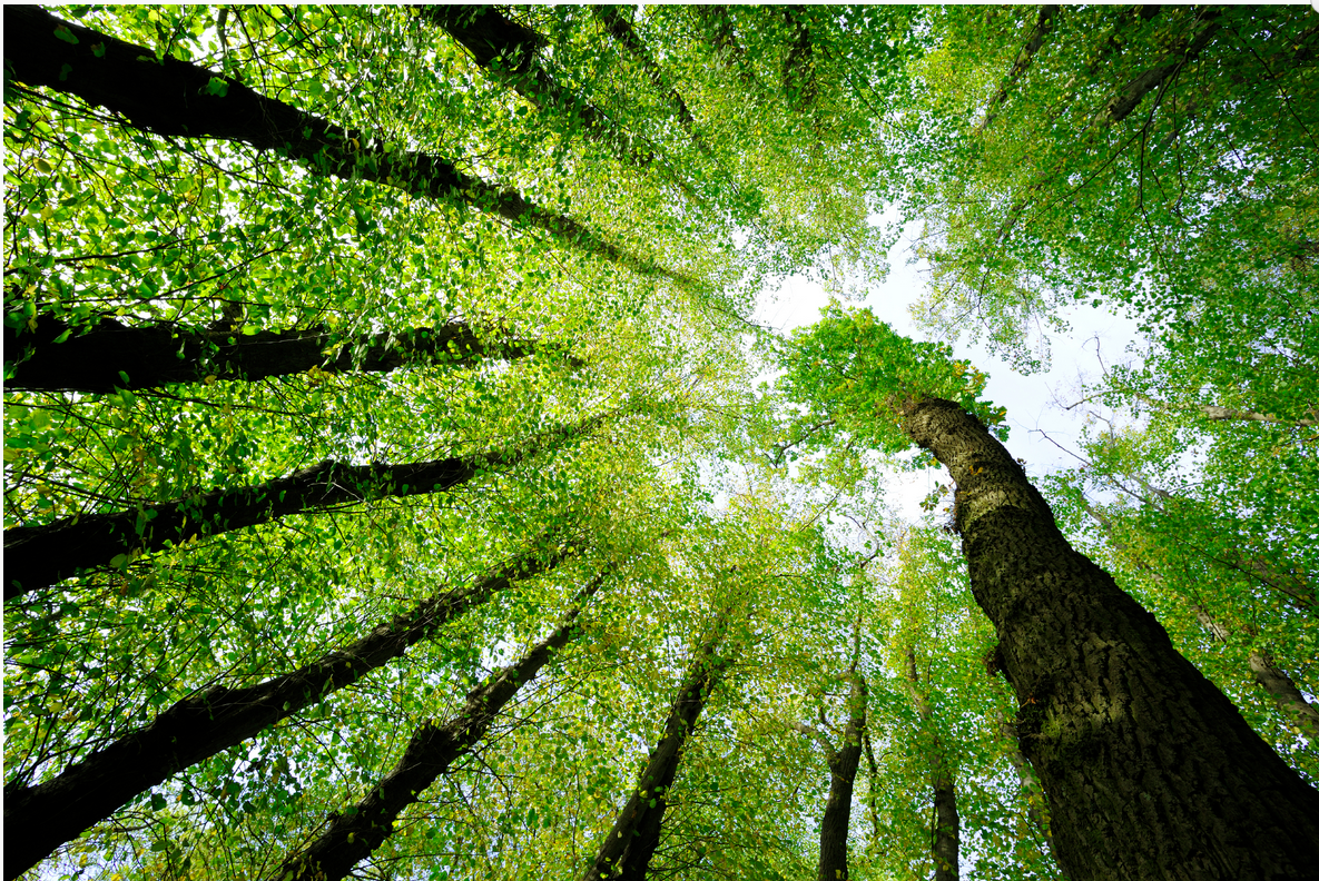 Pamela Leigh Richards » Trees Green High Forest