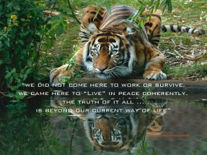 Tiger Reflecting Green Eyes pamela quote