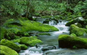 rivers_and_streams