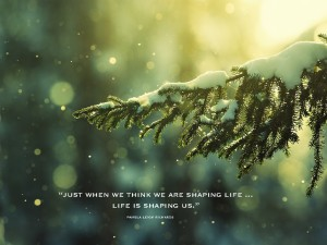 Pamela quote Tree snowfall