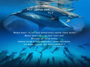 dolphins pamela quote