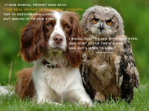 Dog.Owl.Pamela quote Marcel Proust