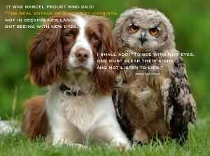 Dog.Owl.Pamela quote Marcel Proust