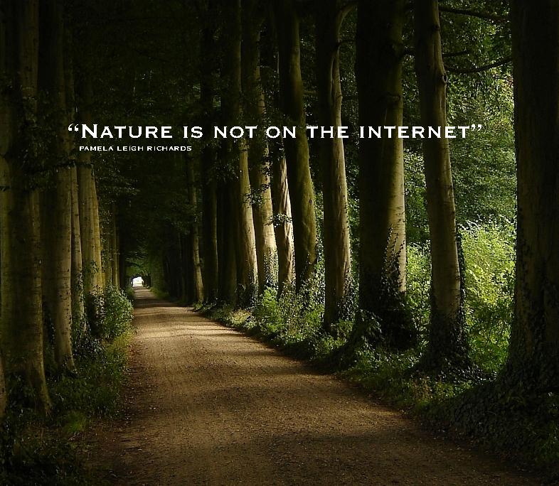 Forest Quotes Quotesgram