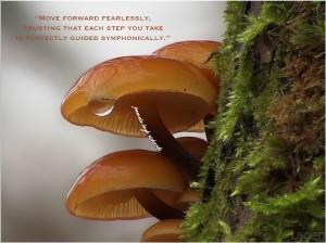 Pamela quote mushroom golden glow