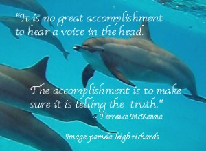 Dolphins Free Pamela Terence McKenna quote