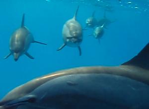 Dolphins Pamela 1