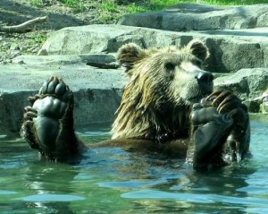 BearPond