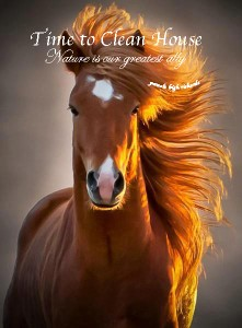 Horse Mane beautiful pamela quote