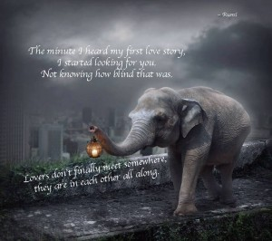 elephant walklight rumi quote
