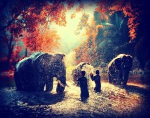elephants two