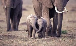 Elephants pamela quote