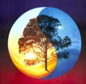Yin Yang Tree 2''
