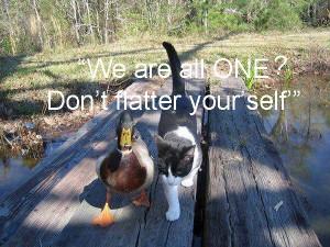 Cat Duck walk pamela quote