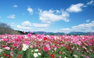 Field-flowers-image8