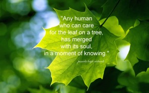 Pamela Quote Green Leaf Tree