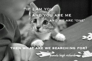 Puzzled Cat pamela quote