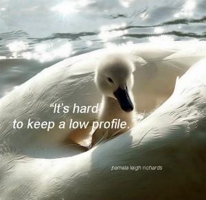 Swan pamela quote 11 sep 13