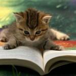 cat-reading-book