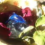 pamela crystal skull dolphins