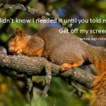 squirrel pamela quote 2
