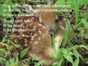 Baby Deer Dawn Abraham in Wildlife - Pamela quote