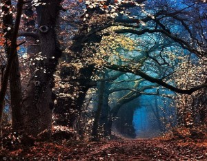 Forest Leaves Walkway
