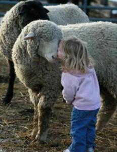 Lamb girl kiss