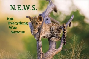 BABY LEOPARD CUB IN TREE pamela quote