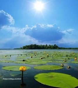 Leaves on Water towards island of peace pamela