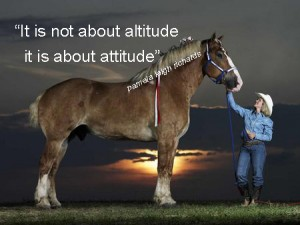 Percheron pamela quote
