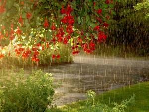 Rain flowing flowers