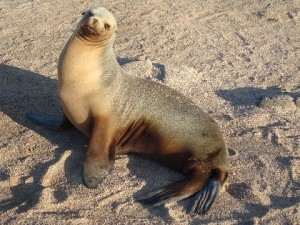 Seal-Look