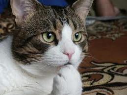 cat hmmm?