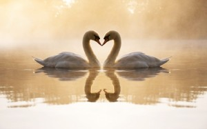 loving_swans-1440x900
