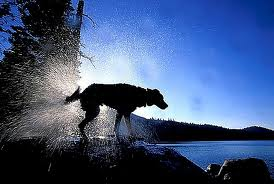 Dog shaking water