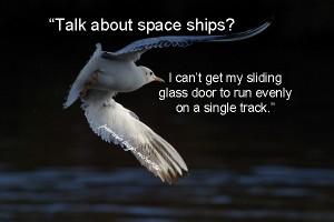 Seagull beauty flying 2
