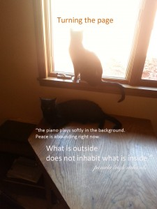 Pamela Cats Window quote