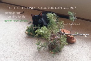 Pamela Midnight Cat quote