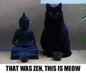 Zen Cat quote